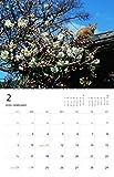 ねこ monthly calendar 2020 ([カレンダー]) 画像