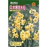 秋植え球根 日本寒咲水仙 白花 (234932)