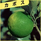 柑橘類の苗木 カボス
