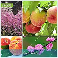 SEEDSのPLAT FIRM-ZLKINGの2個桃の種のフルーツ盆栽の植物エキゾチックな植物種人気の多年生ホームガーデン植物果樹種子ドワーフ