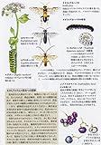 野の花さんぽ図鑑 画像