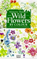 Wildflower By Colour