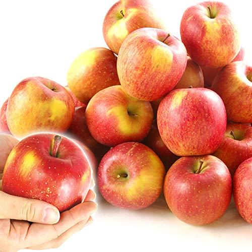国華園 青森産 葉とらず ちびふじ 10kg1箱 ちびフジ りんご