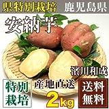 安納芋 M~Lサイズ 2kg(鹿児島 濱川和成)種子島・県特別栽培・無化学肥料さつまいも