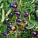 50pcsの「ローズ ブルー」トマトの種子の新品種紫のトマト野菜の種ホームガーデントマト工場DIY