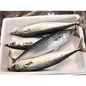 鮮魚 鯖 4本