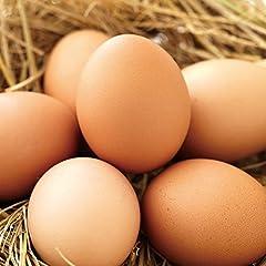 財宝 おいしい 卵 40個 (10個×4