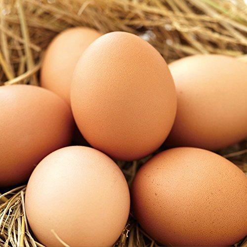 財宝 『おいしい卵』