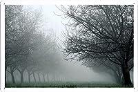並木をカバー#26958霧のティンサイン 金属看板 ポスター / Tin Sign Metal Poster of #26958 Fog Covering The Row Of Trees