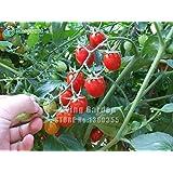 種子トマトチェリートマトの木の種子のトマトの苗100個/パック