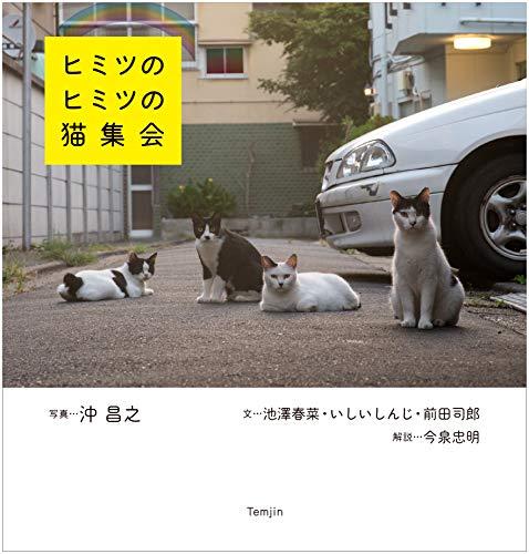 ヒミツのヒミツの猫集会