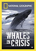 Whales in Crisis [DVD] [Import]
