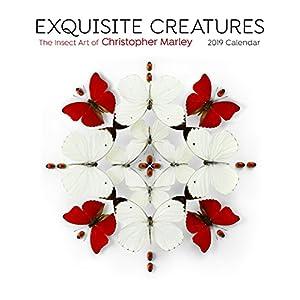 Exquisite Creatures - Insect Art 2019 Calendar