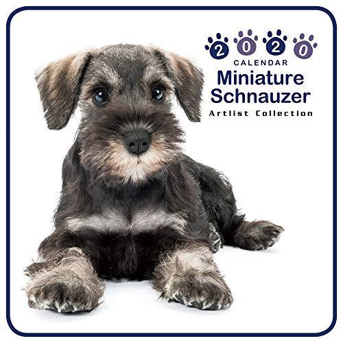 カレンダー 2020 ミニサイズ 壁掛け ミニチュア・シュナウザー (ミニ) 403354 ノーマルレンズシリーズ 2019年9月-2020年12月 アーリスト イヌ いぬ Miniature Schnauzer