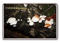 Mushrooms/Collybia batyracea/fridge/magnet...!!! - 蜀キ阡オ蠎ォ逕ィ繝槭げ繝阪ャ繝