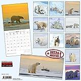 Eisbaeren - Polar Bears - Ours Polaires 2018. Artwork Edition