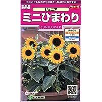 サカタのタネ 実咲花5629 ミニひまわり ジュニア 00905629
