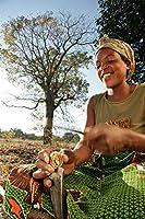 PLATのFIRM:Schinziophytonのrautanenii»最も希少な種 - モンゴンゴナット - 便利な-1新鮮な種子