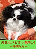 パピヨン 犬
