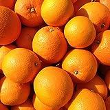国産 愛媛県 大三島 ネーブル オレンジ 10kg ご家庭用 サイズ バラ