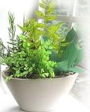 【ギフト】プリザーブドフラワーの観葉植物 [ライム] (寄せ植え)