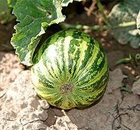 緑のメスネロン種子20個の種子が見つかったとストライプククルメスメロスイートフルーツB115