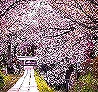 8 x日本の桜の開花桜の木の種子 - ウミウシの種子 - 桜 - ゾーン5-8 - MySeedsで。Co