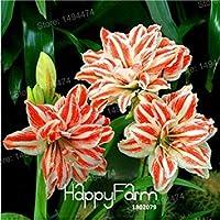 バイオレットホームガーデン100個のためにさまざまな品種の花の種子盆栽工場をミキシング混合色ユリシーズ安い香水ユリシーズ
