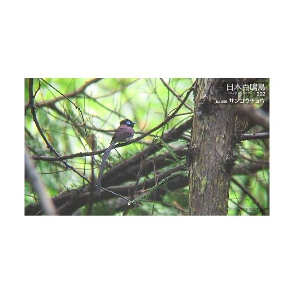 シンフォレストBlu-ray 日本百鳴鳥 2...の紹介画像19