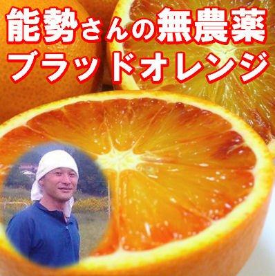 無農薬 ブラッドオレンジ 5kg A品 有機栽培 能勢さんのブラッドオレンジ 国産