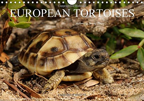 European Tortoises / UK-Version 2016: The pictures in that calendar show tortoises of southern Europe in their habitats (Calvendo Animals)