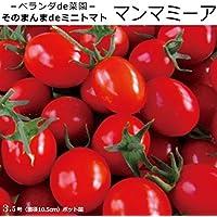 実生 ミニトマト 苗 マンマミーア 鉢植え専用苗 トマト