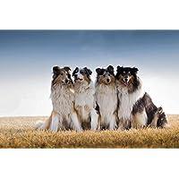 コリス動物 - #42010 - キャンバス印刷アートポスター 写真 部屋インテリア絵画 ポスター 90cmx60cm