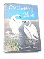 The Courtship of Birds
