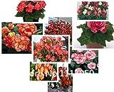 販売!送料無料の100pcs 10種類の盆栽ベゴニアの種子100%本物のオーガニックブルーミングフラワーシーズガーデンプラント