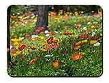 ポピーの花、赤、黄色、白、草、公園 パターンカスタムの マウスパッド 植物・花 (22cmx18cm)