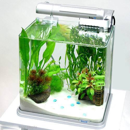 トロピカ-初心者向けアクアリウム、熱帯魚水槽、金魚、メンテナンスの情報メディア            30センチ以下の水槽で飼える、おすすめ小型熱帯魚ベスト10