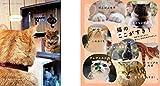 なごみ猫 BEST SELECTION 最高に癒される飼い猫たちが大集合 画像