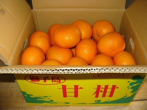鹿児島県 獅子島産 紅甘夏2L,3Lサイズ 10kg詰め あまなつ柑
