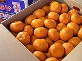 フルーツyamakiti 和歌山下津産 蔵出し本貯蔵みかん 秀Mサイズ10キロ箱