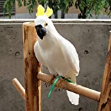 プエブコ PUEBCO バードオフジェ ARTIFICIAL BIRDS オウム Parrot Lサイズ 100074