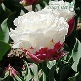 チューリップ:アイスクリーム2球入り 2袋セット[ピンクのカップからモコモコ花が咲く][秋植え球根] ノーブランド品
