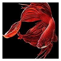 Tuankay ダイヤモンド塗装 ダイヤモンド絵画 DIY ダイヤモンドペインティング 刺繍キット 5D 樹脂 金魚