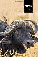 "Buffalo Bison Yak Gaur Week Planner Weekly Organizer Calendar 2020 / 2021 - Deep in Bushes: Cute Wildlife Animal Pet Bullet Journal Notebook Diary in 6"" x 9"" Inch Pocket Size"