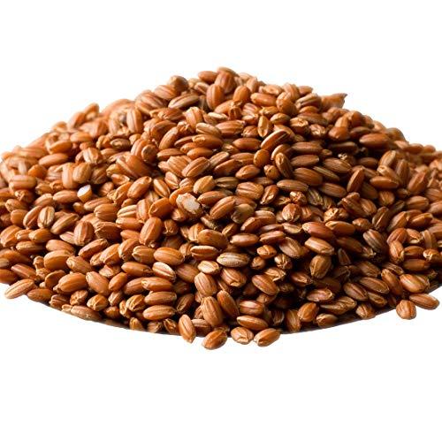 米 雑穀 雑穀米 国産 赤米 500g 厳選 もち赤米 送料無料※一部地域を除く 雑穀米本舗