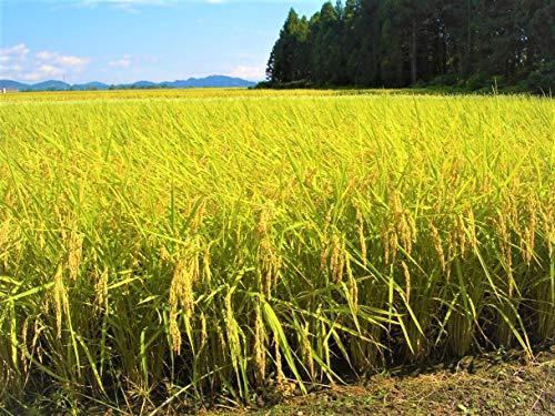 『越後製菓 玄米ごはん 150g×12個』の3枚目の画像