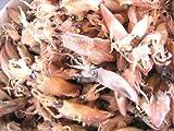 ギフト おのみち発 香川県産 小いか珍味 イカの煮干し 中大サイズ 150g