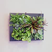壁面グリーンフレームドラセナブラック(光触媒)造花・観葉植物・インテリアグリーン