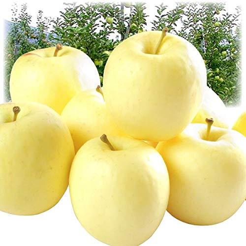 国華園 青森産 ホワイト ふじ 5kg1箱 りんご