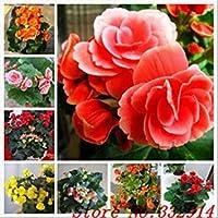 種子パッケージ セール!の100pcs /バッグレアPrunsムメ種子20個の様々な盆栽花の種子庭の新規プラントアンチ